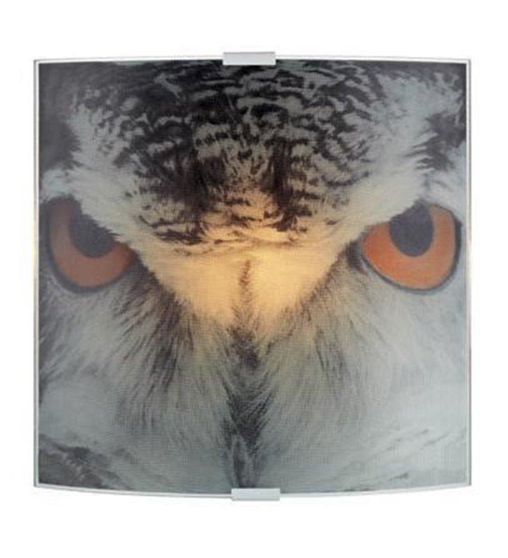 Kinkiet Owl